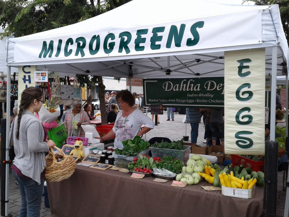 microgreens business