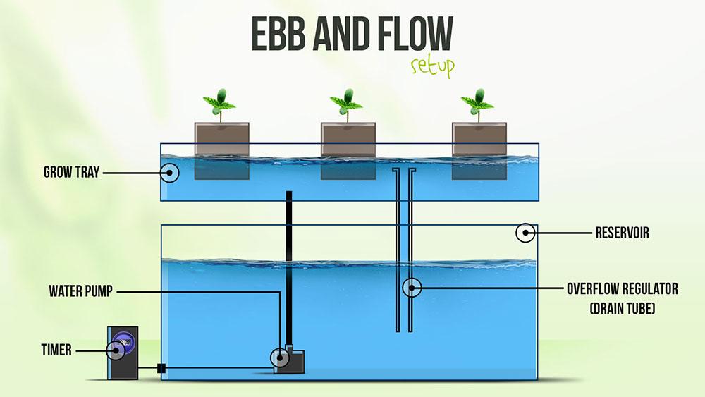 Ebb Flow System