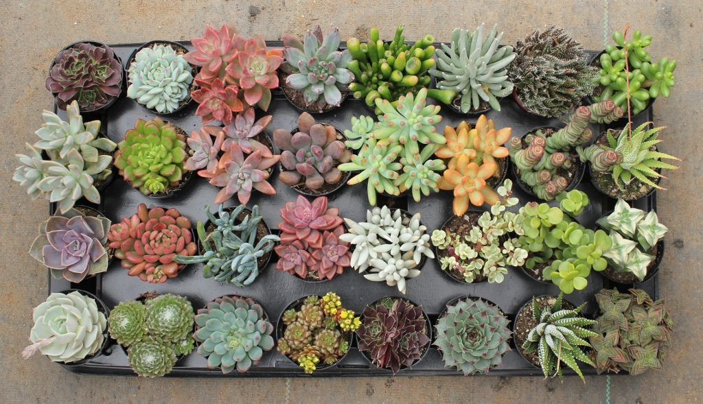 How to ship succulents?