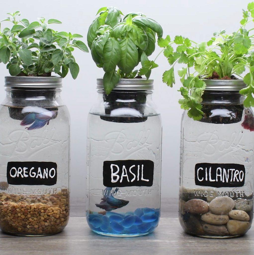 Glass Aquaponic DIY