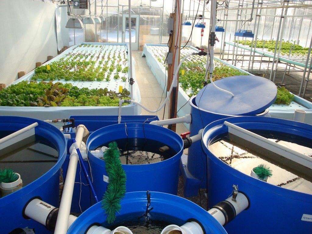 Aquaponic bucket DIY system
