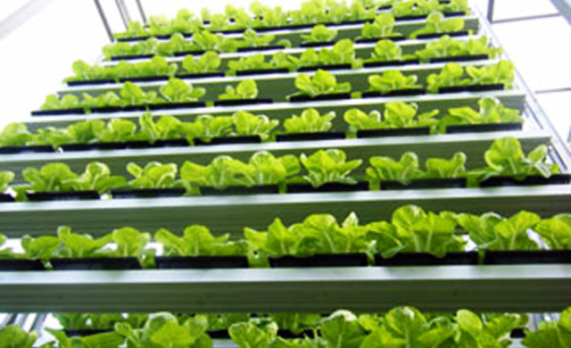 Vertical Rack arrangement aquaponic system
