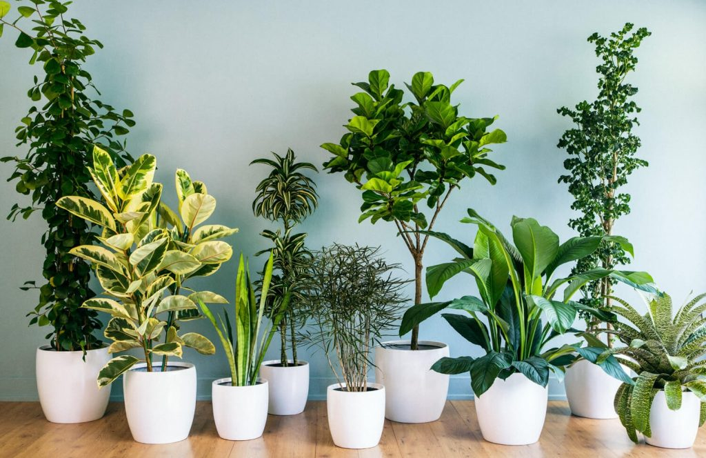27 Easy To Care For Low Maintenance Plants Gardening Heavn