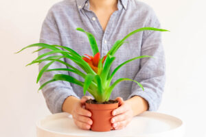 How To Transplant Bromeliad Plants